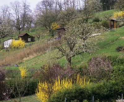 Allotments in springtime