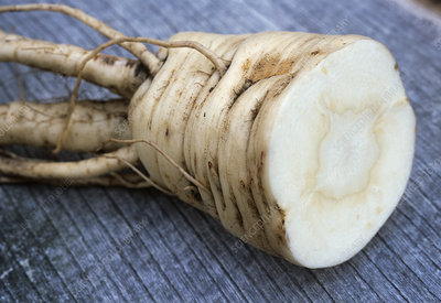 Parsnip (Pastinaca 'Tender and True')