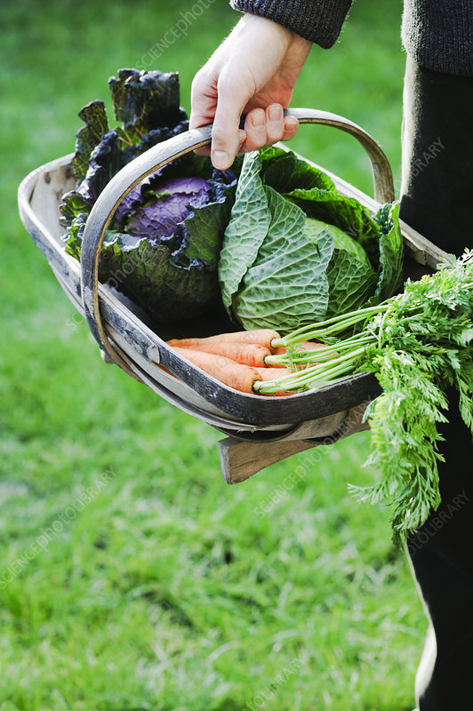 Harvested organic vegetables