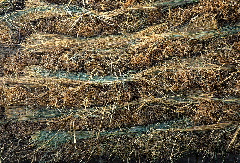 Layers of harvested hay