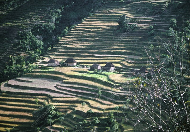 Rice and millet terraces