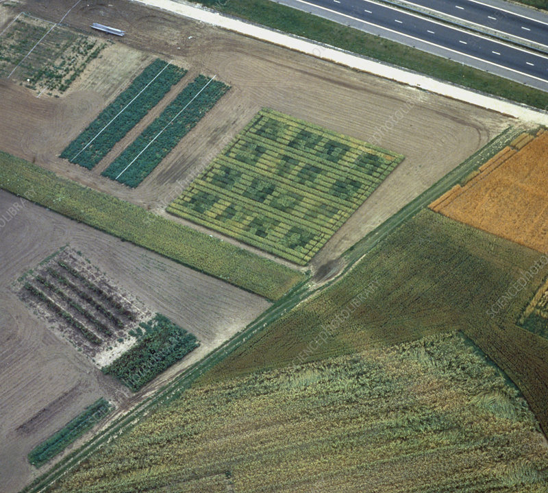 Aerial photo showing crop patterns