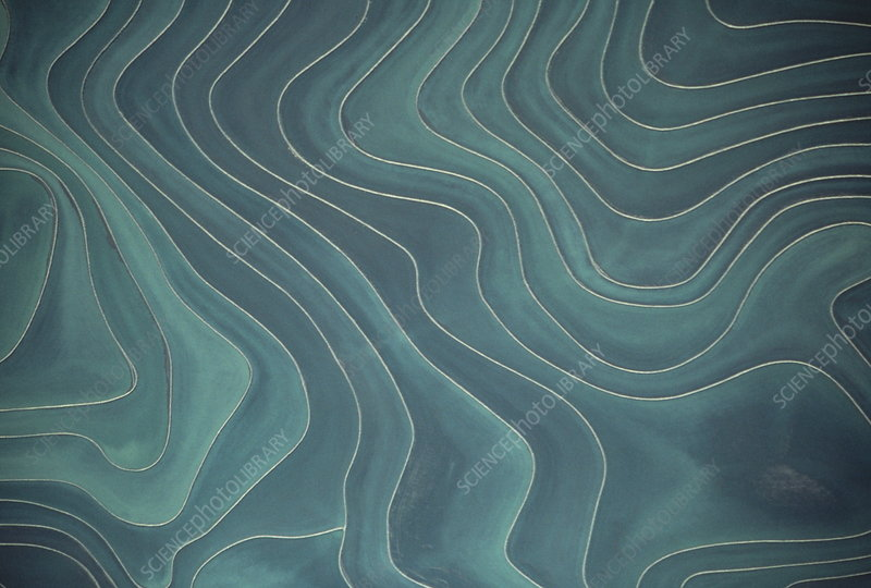Aerial view of terraced rice paddies, California