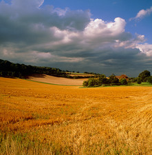 Rural landscape, straw stubble and cumulus clouds.