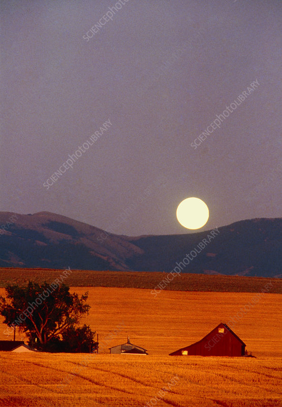 Moon rising over a field of wheat & farm buildings