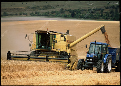 Combine harvester off-loading grain