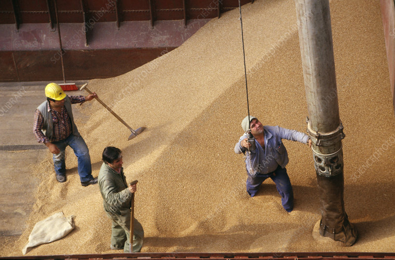 Unloading grain from ship