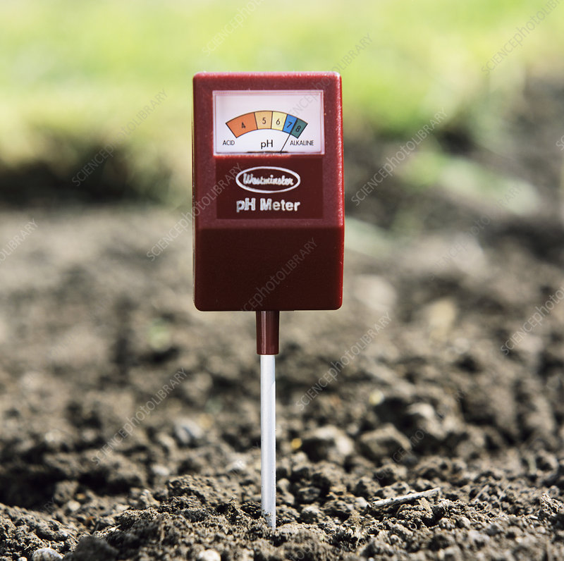 alkaline soil Mag-i-cal soil food for alkaline soils lowers soil ph mag-i-cal's fine particles break-down quickly in the soil and is formulated for superior performance to help.