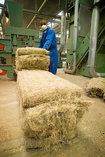 Worker baling hemp straw