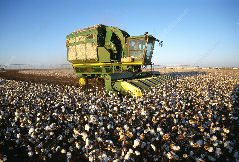 Mechanised cotton harvesting