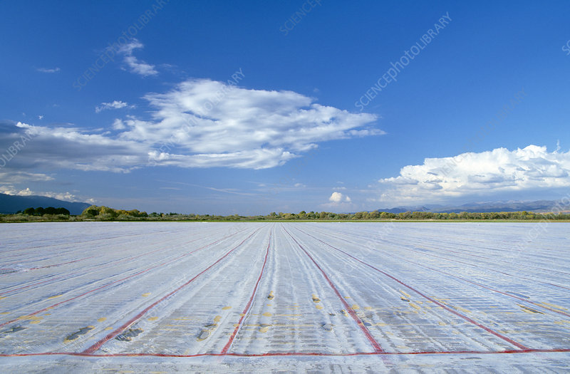 Field covered in plastic sheeting
