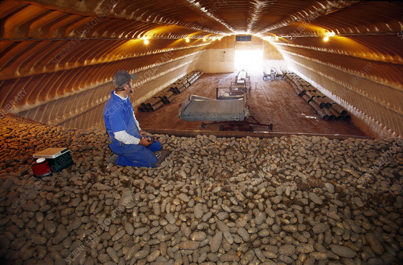 Potato storage facility
