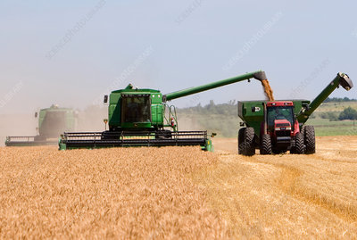 Wheat Harvest in Kansas