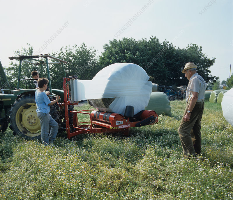 Wrapping silage bales in white polyethylene