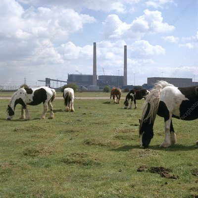 Horses grazing near a power station