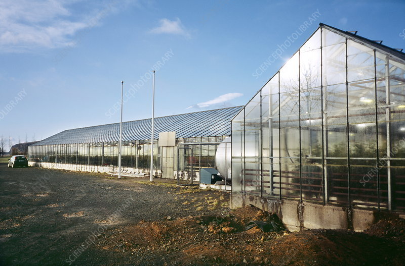 Geothermally heated greenhouse