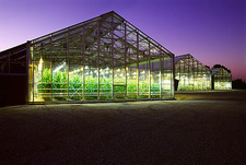 Corn research greenhouses