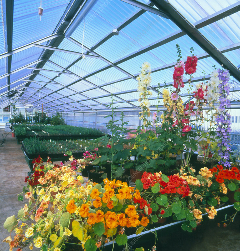 Flowers and other plants growing in greenhouse