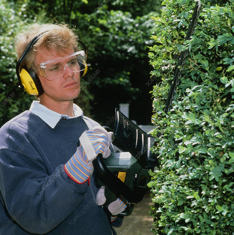 Man trimming hedge with protective gloves