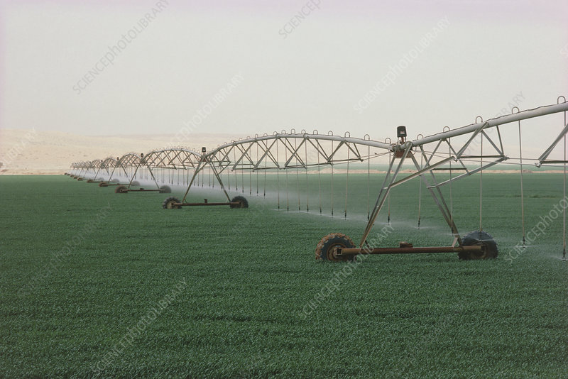 Spraying of water over fields of wheat