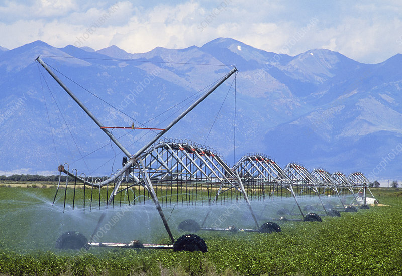 Sprinkler jets irrigating a field of potatoes