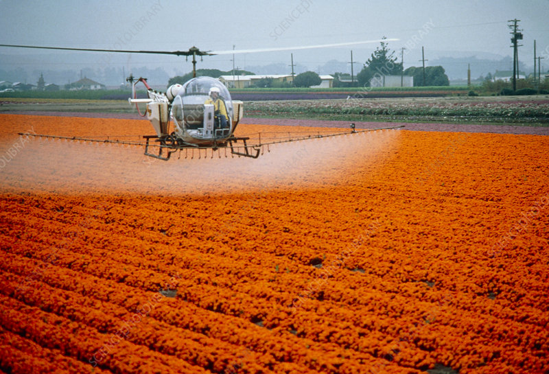 Agricultural helicopter spraying a flower crop