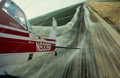 Light aircraft spraying cotton, Kern County, Ca.