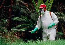 Weedbuster sprays herbicide on grass in Hawaii