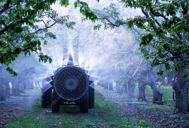 Farmer spraying pesticide in an orchard