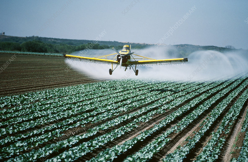 Spraying insecticide on carrots