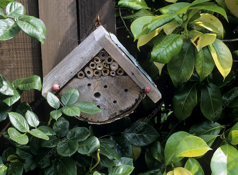 Winter shelter for helpful garden insects