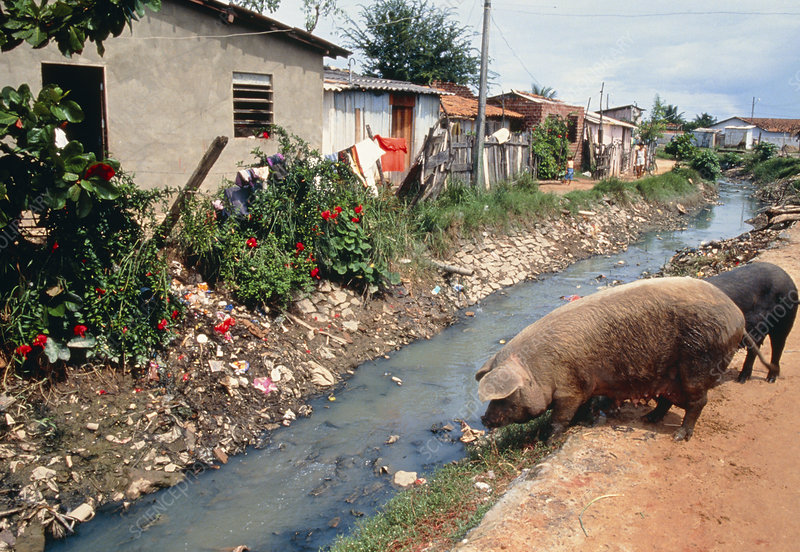 Polluted drainage channel in a favela in Brazil