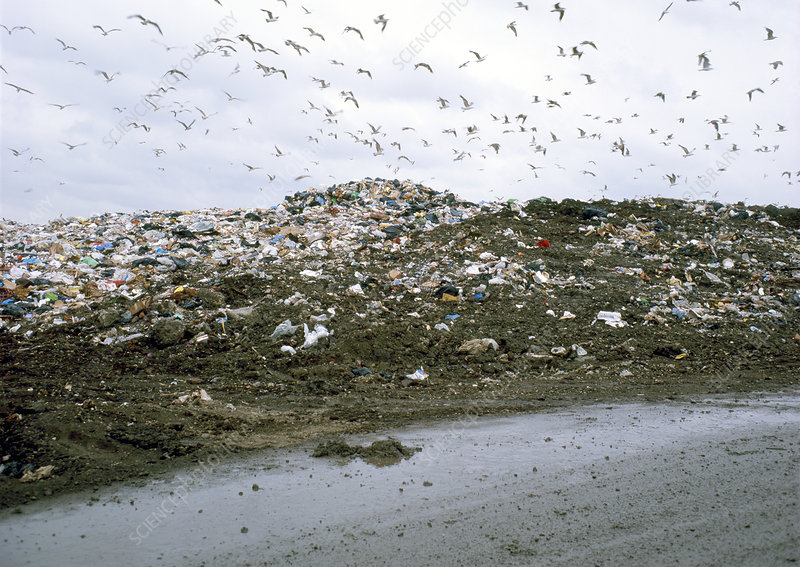 the environmental hazard of the largest landfills in the united states The united states is facing a huge solid-waste disposal that posed a significant health hazard this one facility was the largest landfill in the.