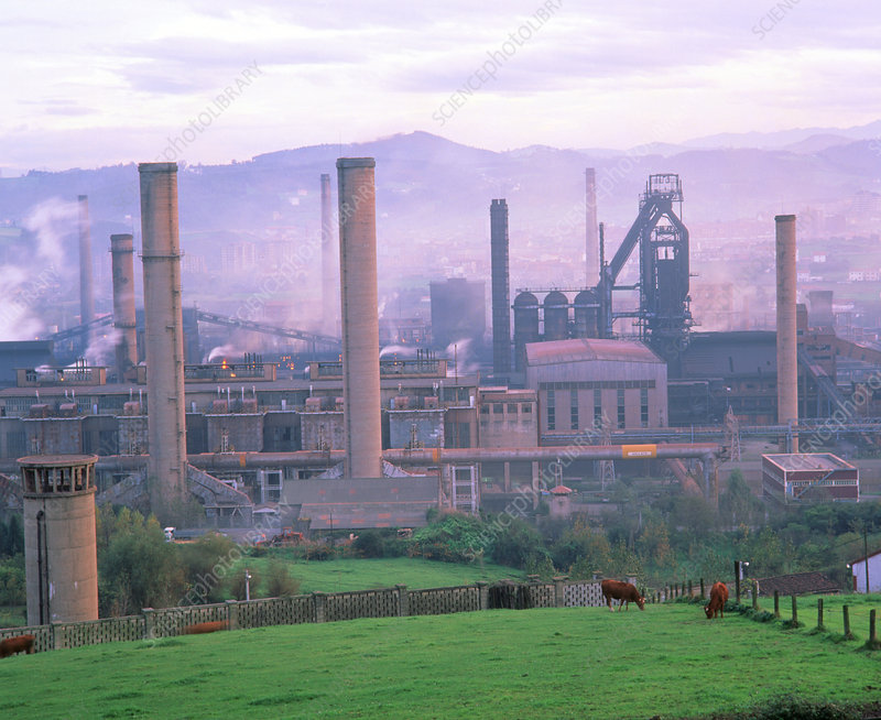 Cows at pasture near smog-producing steelworks