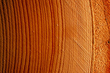 Examination of growth rings