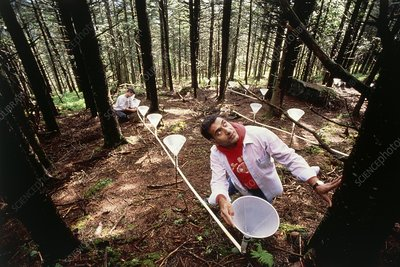 Forestry scientist with expt to measure acid rain