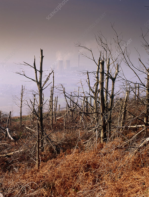 Trees killed by acid rain and other pollution