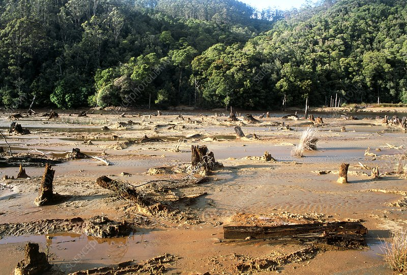 Polluted King River causes deforestation, Tasmania