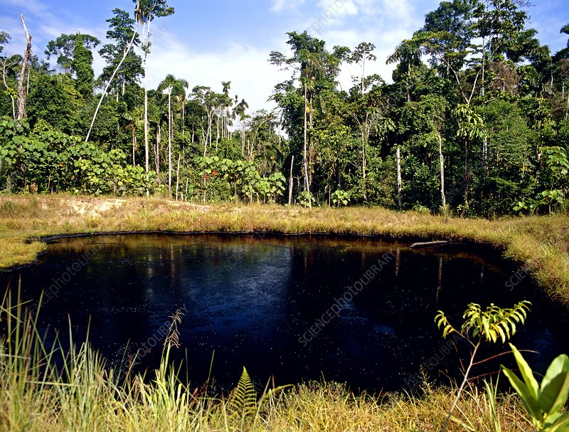 Pool of oil beside well in Amazonian rainforest