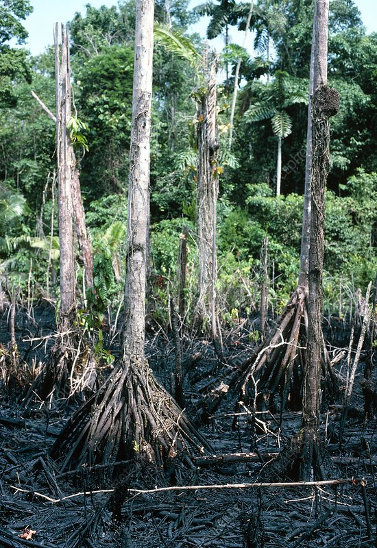 Oil spilled by Texaco in rainforest, Ecuador.
