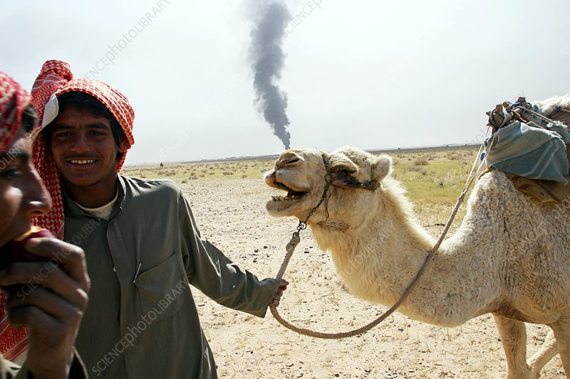 Camel and oil well fire, Iraq, 2003