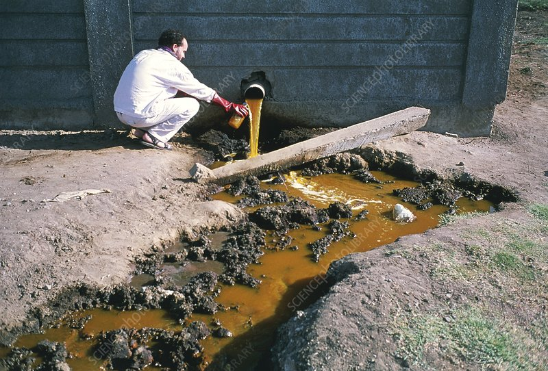 Scientist collects a sample of polluted water