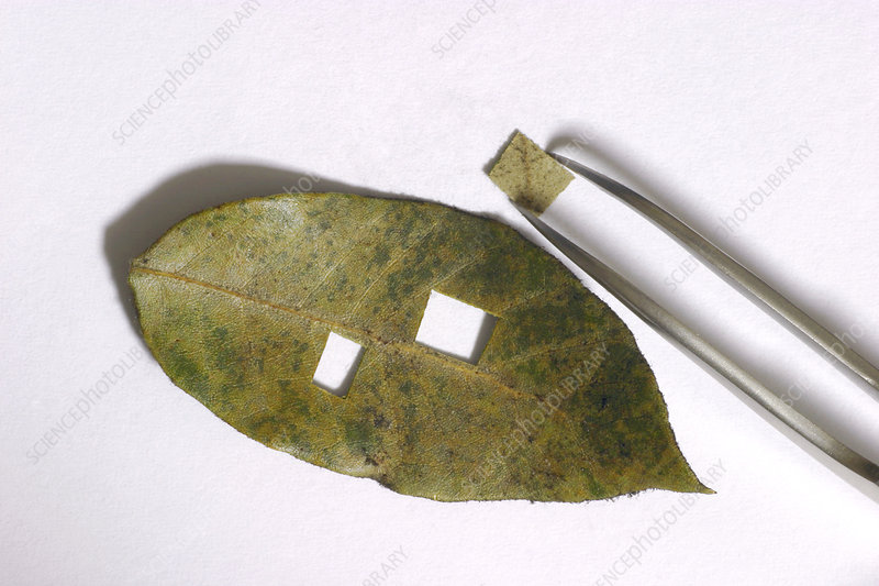 Air pollution monitoring using a leaf