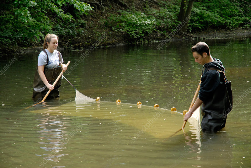 Students using a seine net to sample river