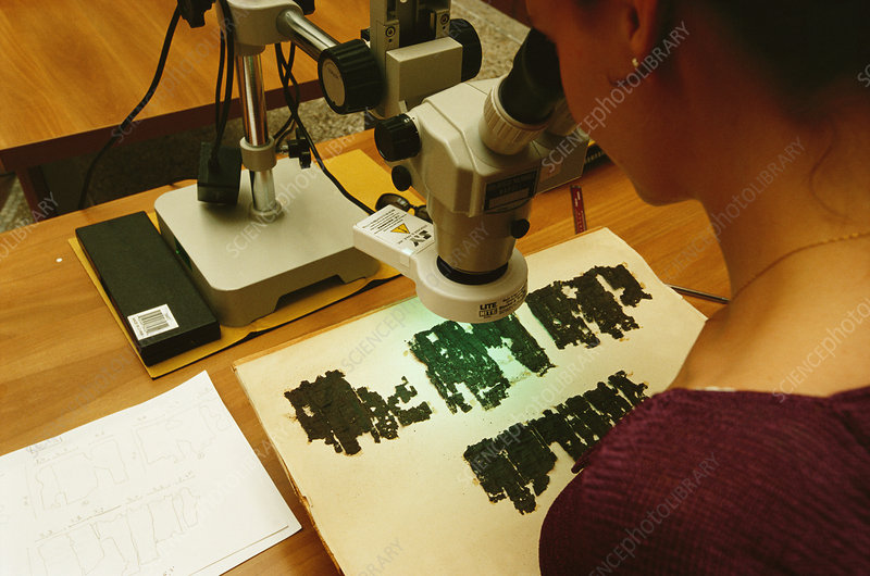 Researcher studying papyrus scrolls