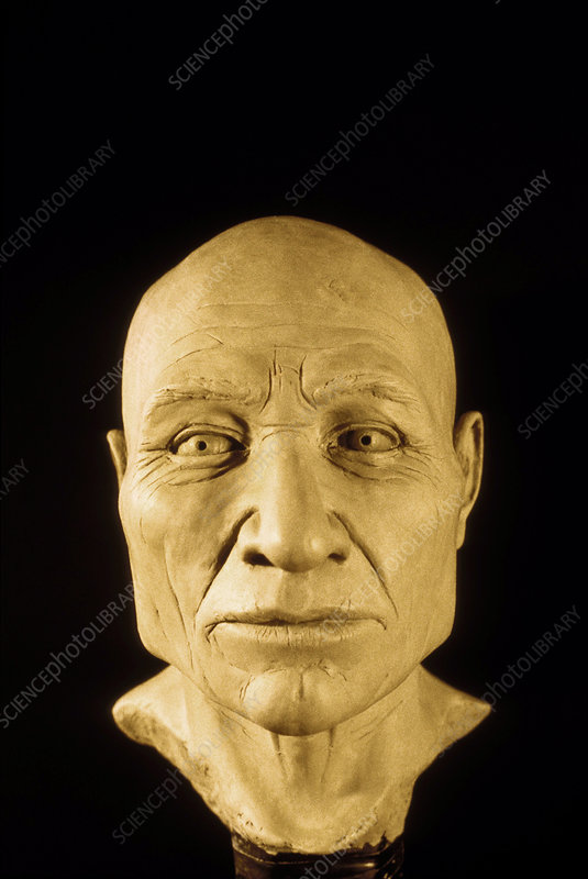 Clay reconstruction of the Kennewick Man