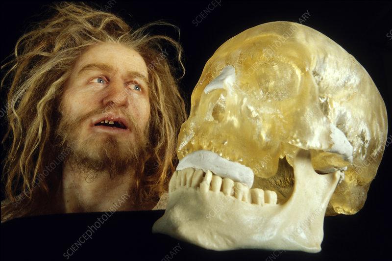 Model and skull cast of Klaus Stortebeker