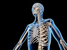 Upper body skeleton, computer artwork