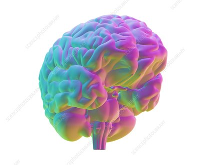 Human brain, computer artwork