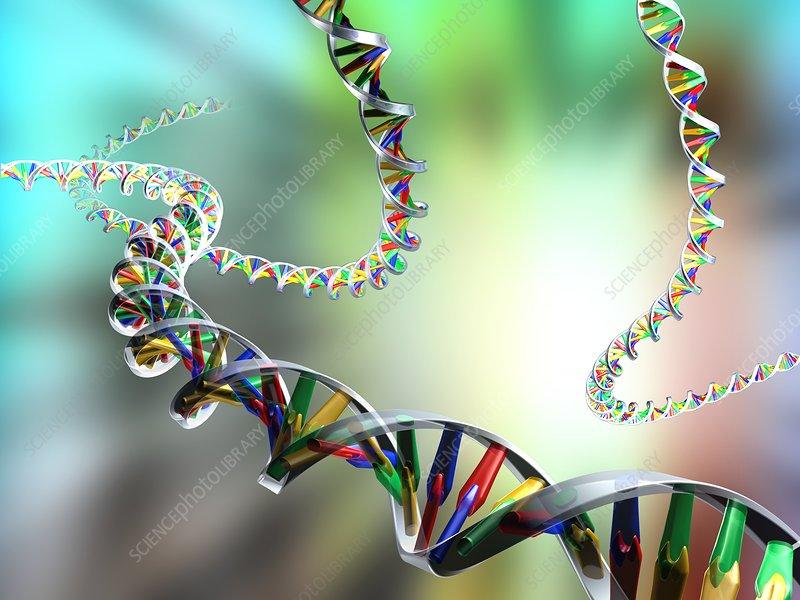 DNA molecules, computer artwork